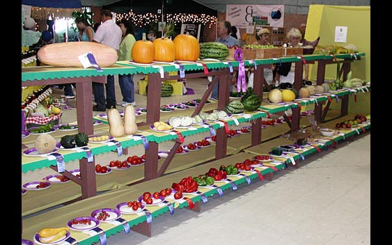 A colorful display of locally grown produce. Lake County Fair, Lakeport