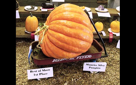 Best of Show 1st Place - A very large pumpkin