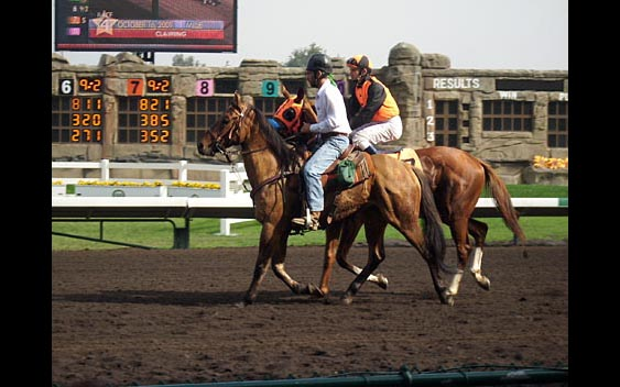Horses and jockeys on the race track